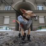 Первая помощь собакам при отравлении антигололёдными реагентами