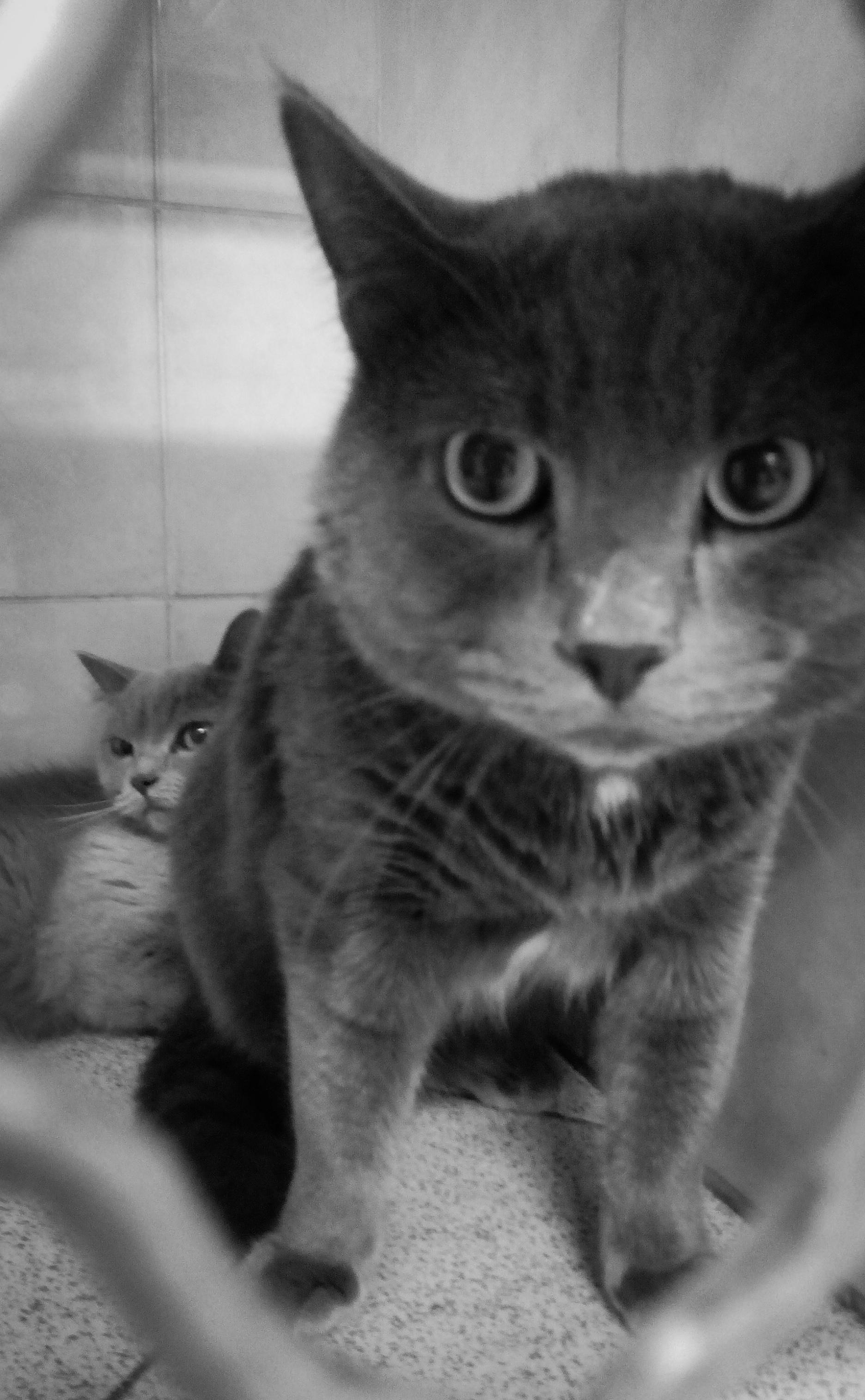 кот обезвоженный