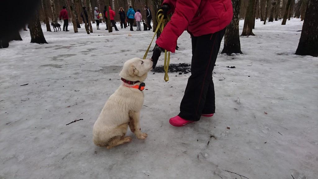 обучение щенка
