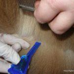 Как подобрать средства защиты от клещей для собаки или кошки