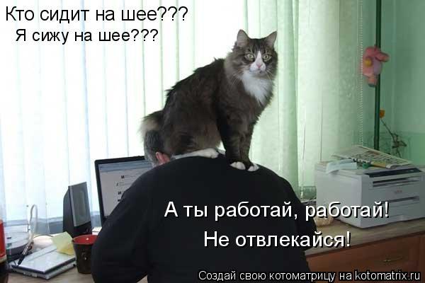 Кот на шее