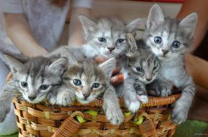Берём котёнка в добрые руки
