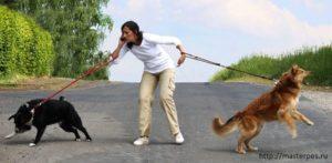 Хочу ли я, могу ли я...? или Немного о возможностях хозяина собаки
