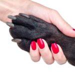Как выбрать когтерезку для собаки или кошки