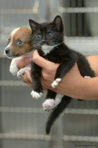 Как должны выглядеть здоровые котёнок и щенок