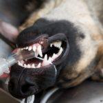 Наркоз – ужас владельца животного или помощник врача?