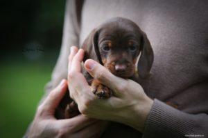 Выбор щенка и