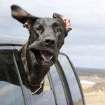 Чем и как чистить уши кошкам и собакам
