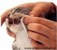 витамины для котов от выпадения зубов
