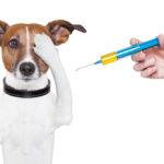 Общие правила проведения инъекций домашним животным