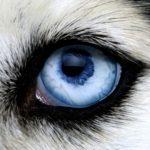 Как ухаживать за глазами собак и кошек