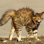 Виды агрессии у домашних животных