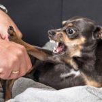 Битва за внимание или Как вырастить агрессивного питомца