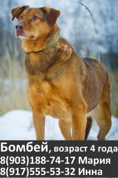 Собака в добрые руки, Москва, собака бесплатно