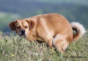 Кал со сгустком крови у кошки или собаки