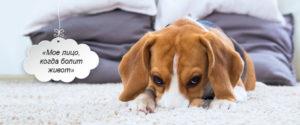 Боль у кошек и собак. Как понять, что ваш питомец испытывает боль?