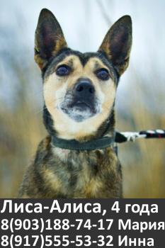 Собака в добрые руки, москва, собака бесплатно, небольшая собака в добрые руки