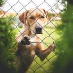 Собака за дачным забором