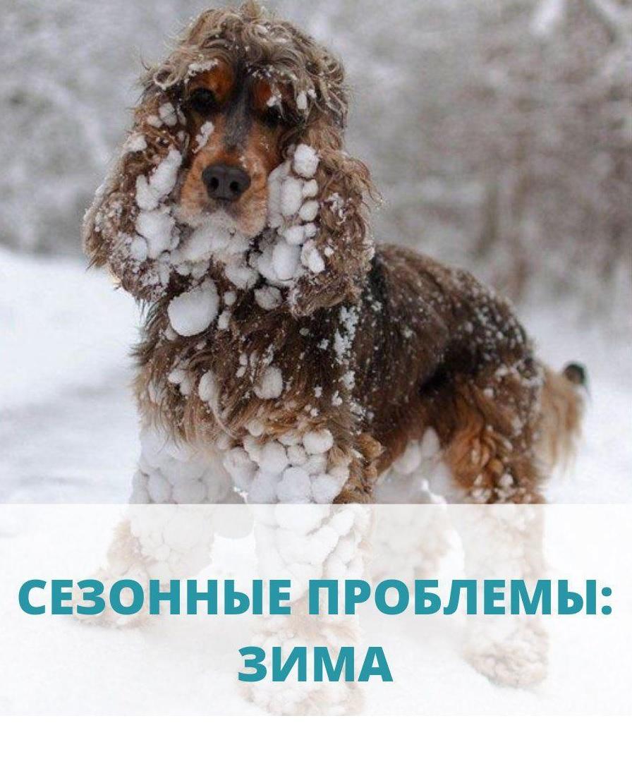 Зимние проблемы