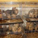 Животные как средство выживания человека