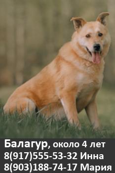 Собака в добрые руки, Москва, приют Некрасовка