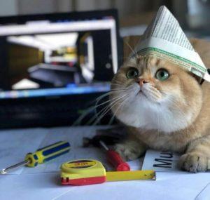 Ремонт квартиры и кошки