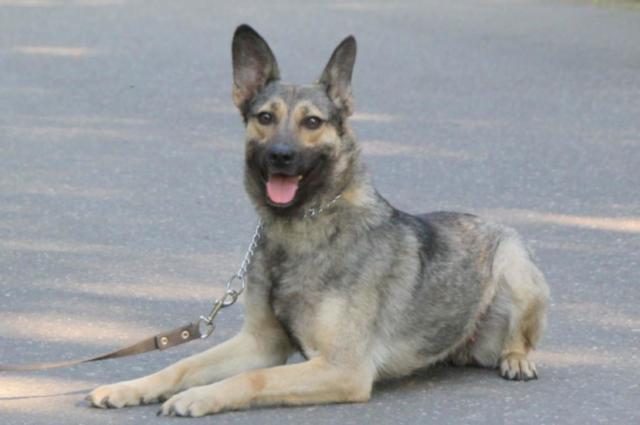 Собака в добрые руки, Москва, Ариша