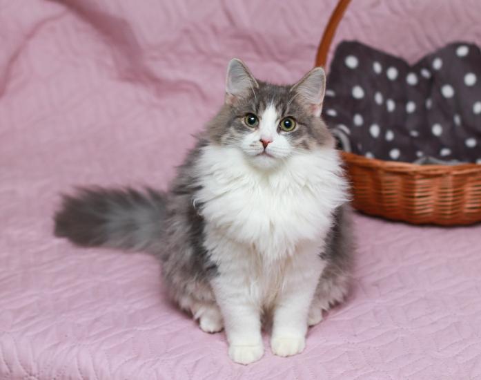 Коты и кошки в добрые руки, Москва, Афоня