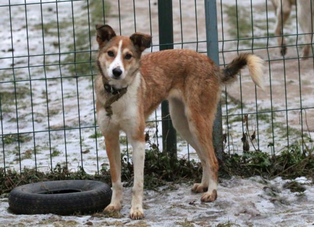 Собака в добрые руки, Москва, Анфиса