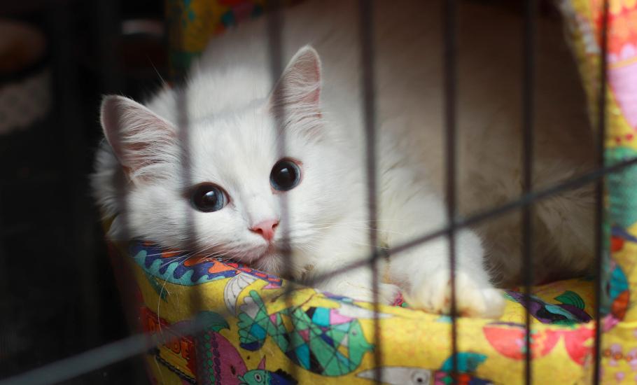 Коты и кошки в добрые руки, Москва, Бася