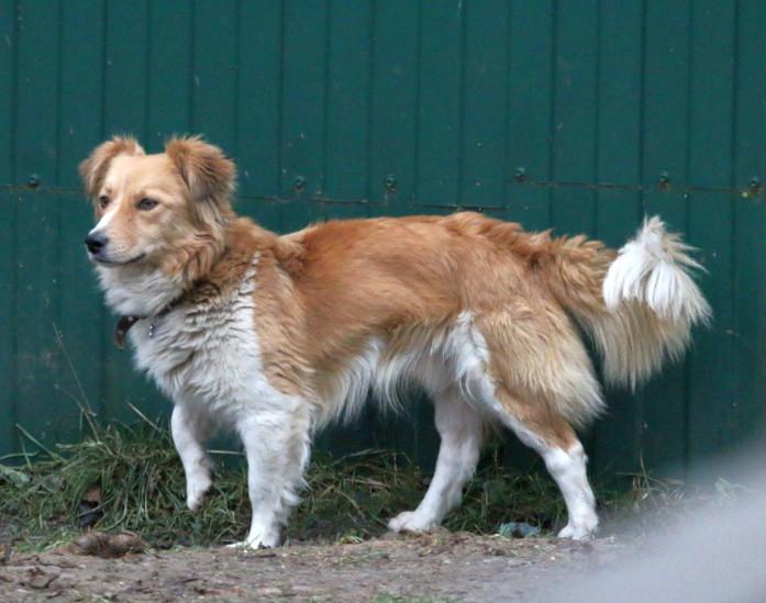 Собака в добрые руки, Москва, Цукат