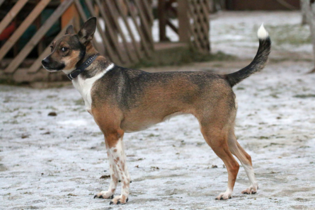Собака в добрые руки, Москва, Кира