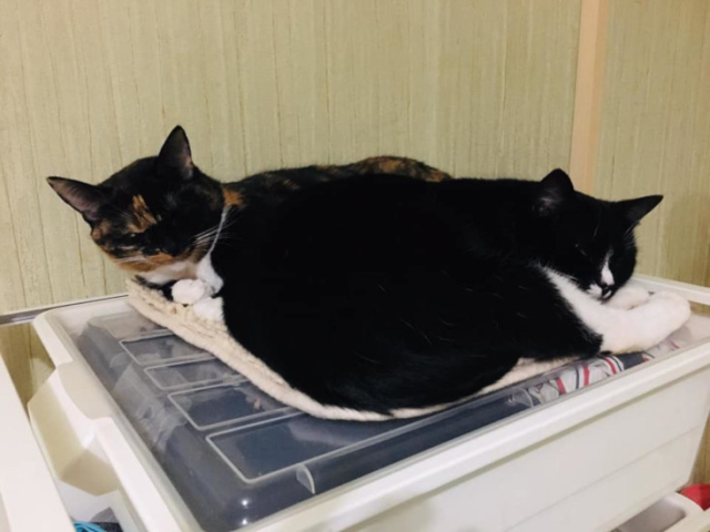Коты и кошки в добрые руки, Москва, Клепыч и Маркус