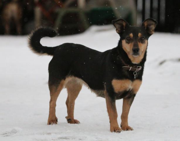 Собака в добрые руки, Москва, Куба