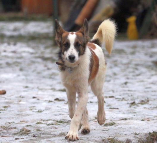 Собака в добрые руки, Москва, Купер