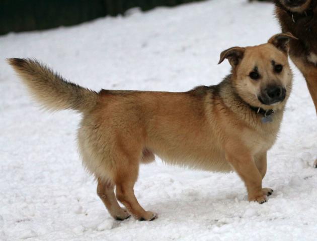 Собака в добрые руки, Москва, Рик