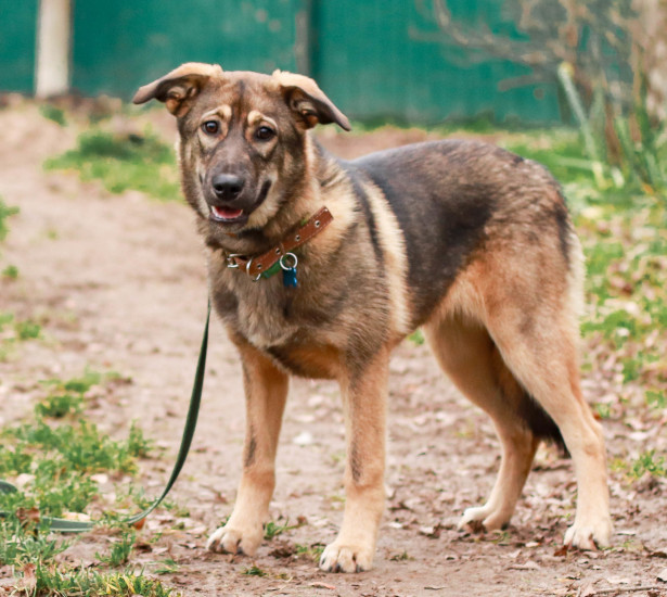 Собака в добрые руки, Москва, Руслана