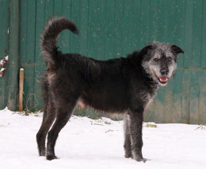 Собака в добрые руки, Москва, Вениамин