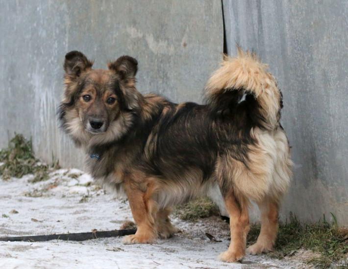 Собака в добрые руки, Москва, Верный