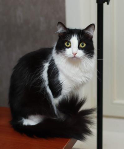 Коты и кошки в добрые руки, Москва, Жасмин