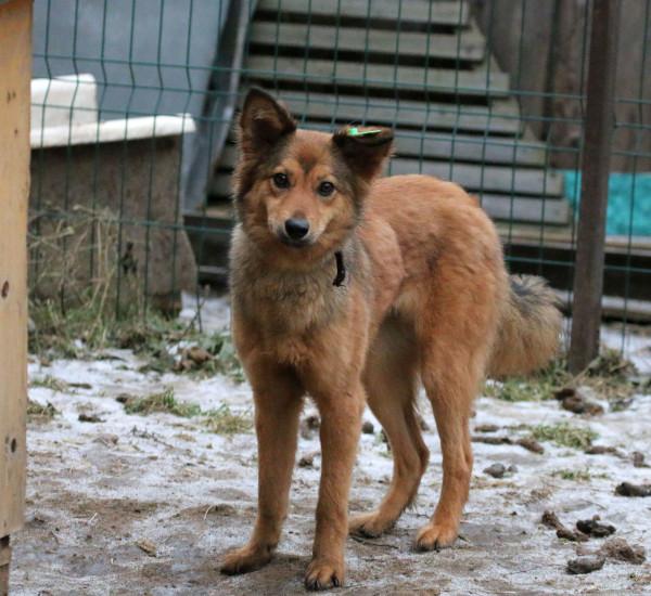 Собака в добрые руки, Москва, Зума