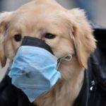 О коронавирусе, домашних животных и их хозяевах
